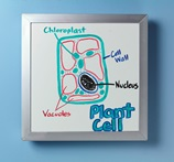 What's Inside a Plant Cell? lesson plan