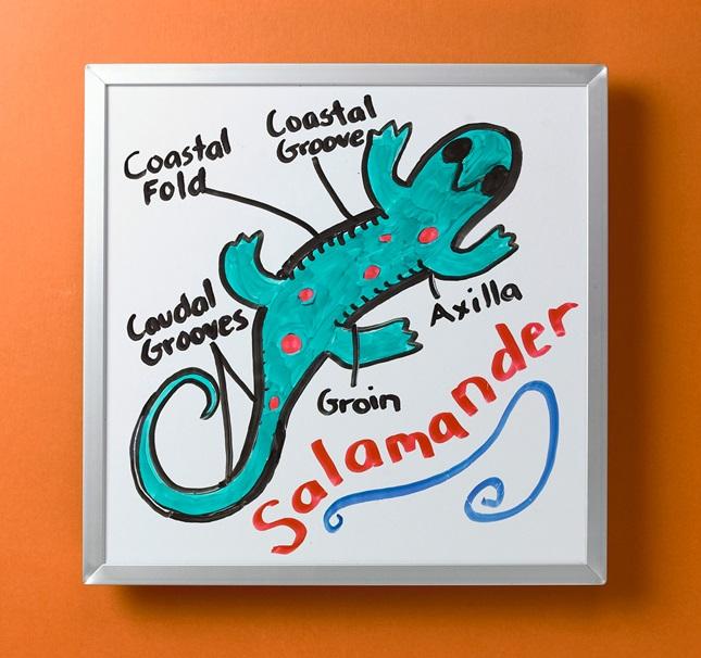 Reptile and Amphibian Anatomy | crayola.com.au